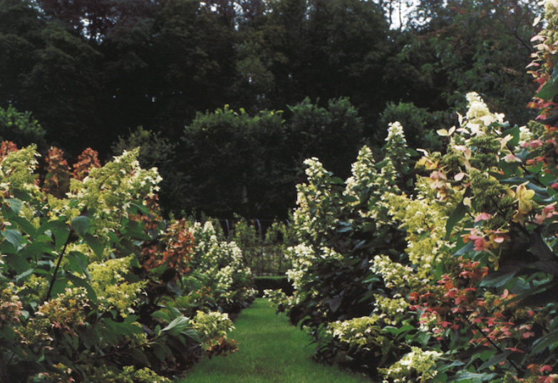 Garden Valentino